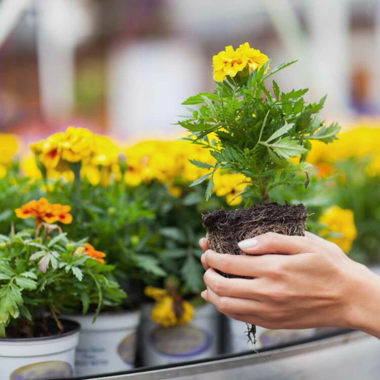 Person holding a flower in a front of several potted flowers | Garden center advertising